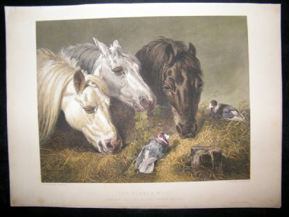 After John Herring C1870 Hand Col Print. Scanty Meal. Horse Print | Albion Prints